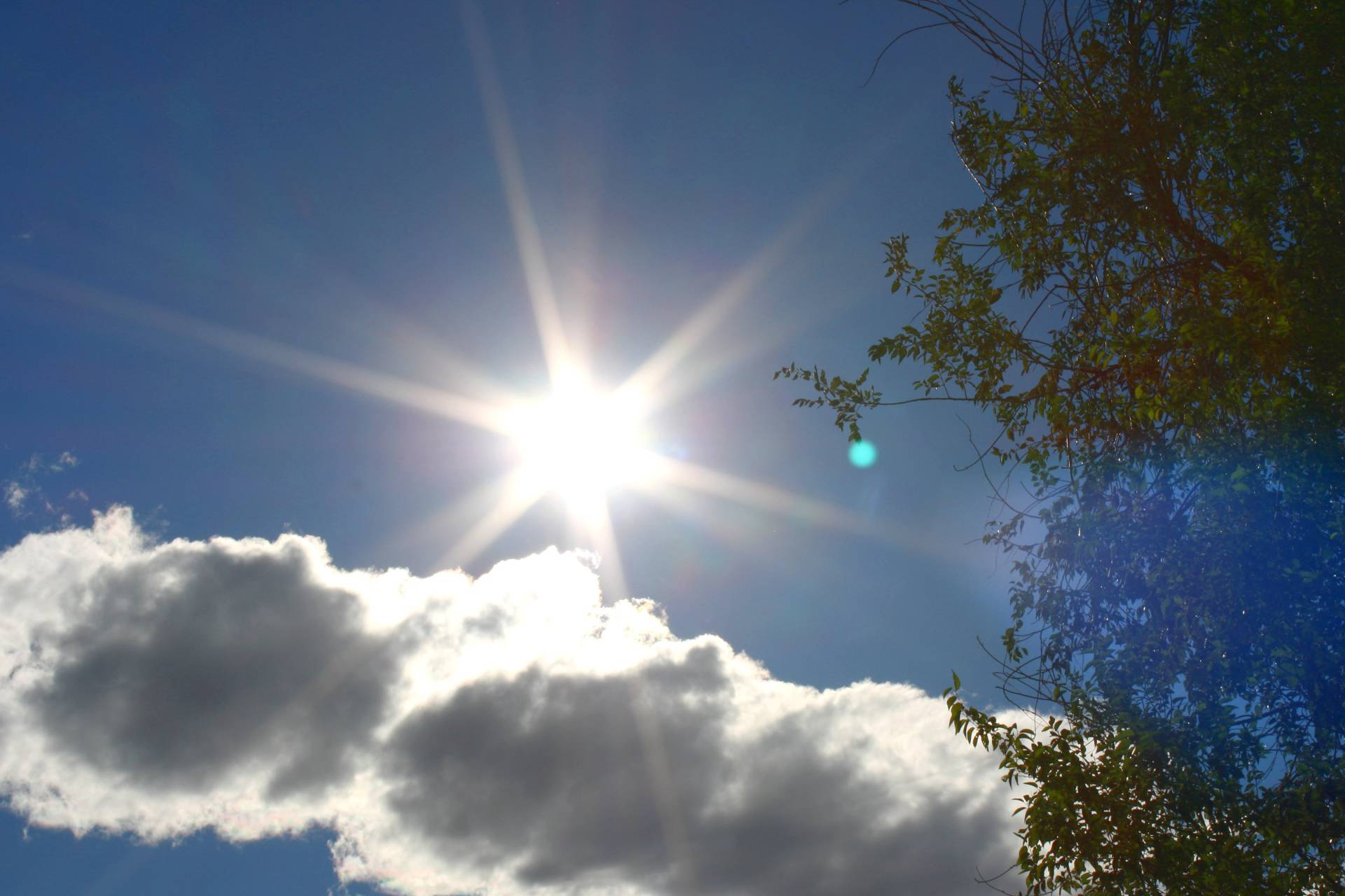sun-in-blue-sky-with-cloud-and-tree